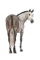 antibodies-horse-antibody