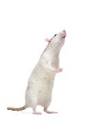elisa-kit-mouse