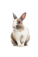 antibodies-rabbit-antibody