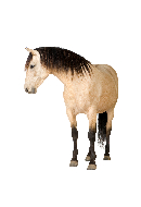 clia-kits-equine-horse-clia-kit
